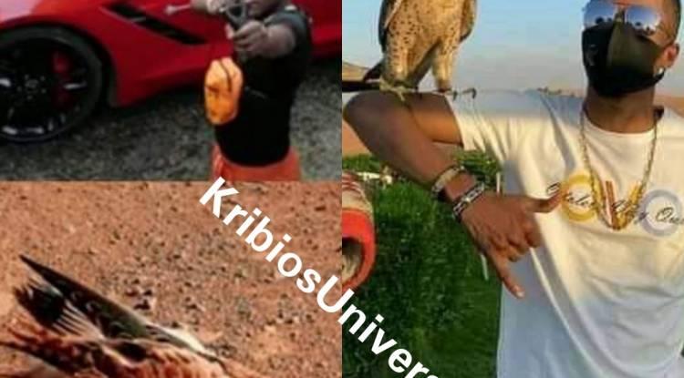 """Affaire """"Meme"""": Enfin Gaz Mawete répond à Innoss'B avec un oiseau sur son bras !"""